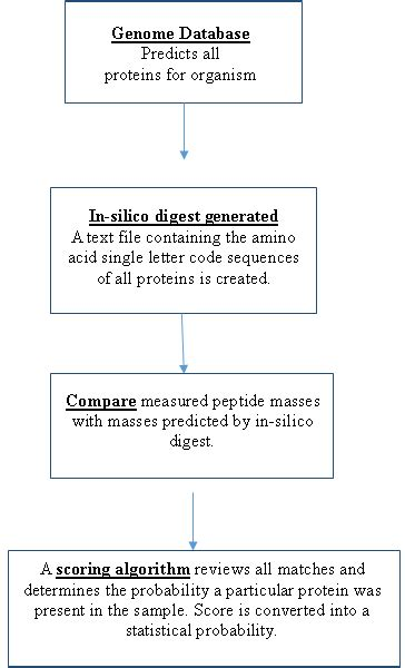 protein molecular weight calculator peptide molecular weight calculator monoisotopic dandk