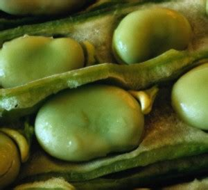 favismo alimenti da evitare quali farmaci integratori e fitoterapici evitare con il