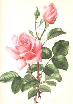 fiori da copiare oltre 1000 idee su dipingere fiori su draghi