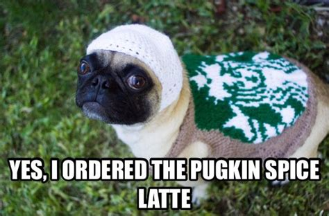 pug starbucks costume 7 best images about on costumes favorite things and white