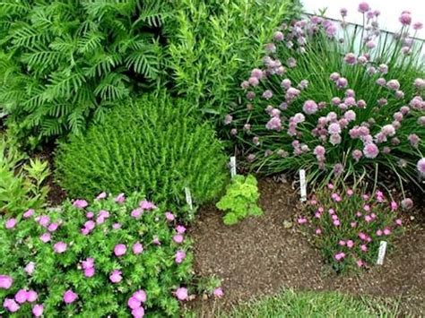 herb garden plants diy herb garden spice up your life bob vila