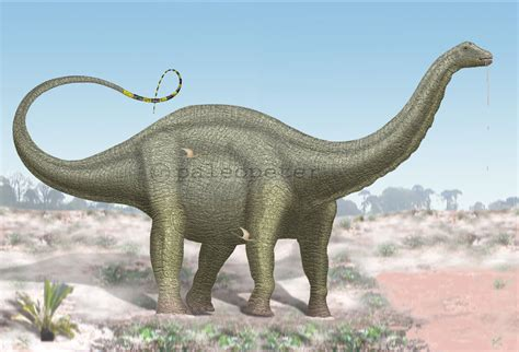 image facts apatosaurus facts and pictures