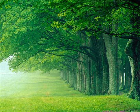 Garden City Eyecare by Beautiful Green Forest Background Gallery Yopriceville