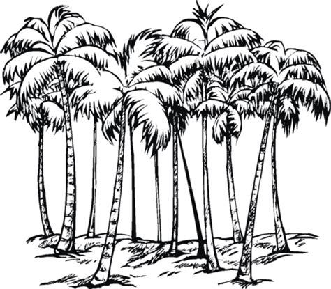 Some Of Coconut Palms Coloring Page Free Printable Coconut Tree Coloring Page