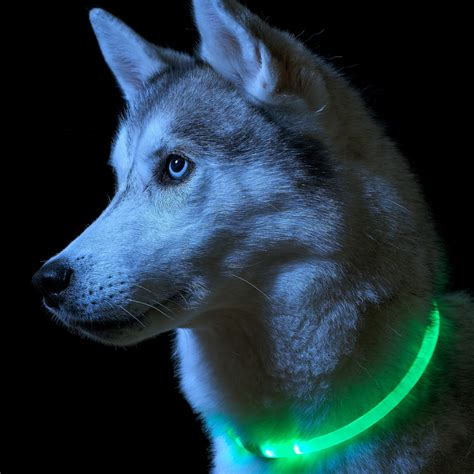 led lights cut to size auraglow led light up collar safety pet leash