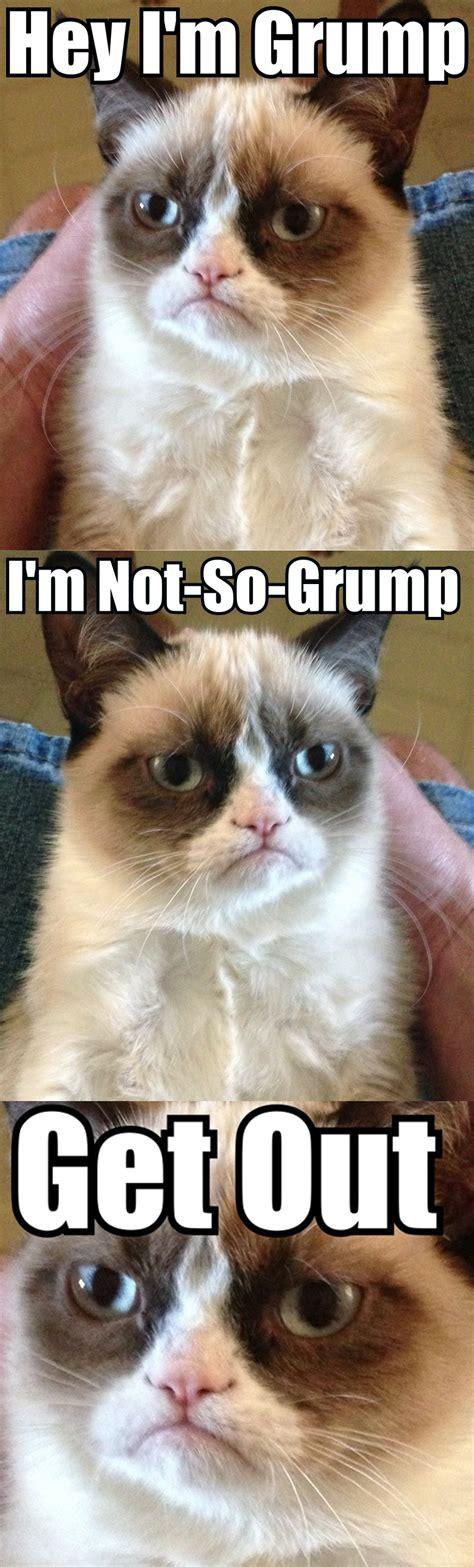 Original Grumpy Cat Meme - two grumpy cats