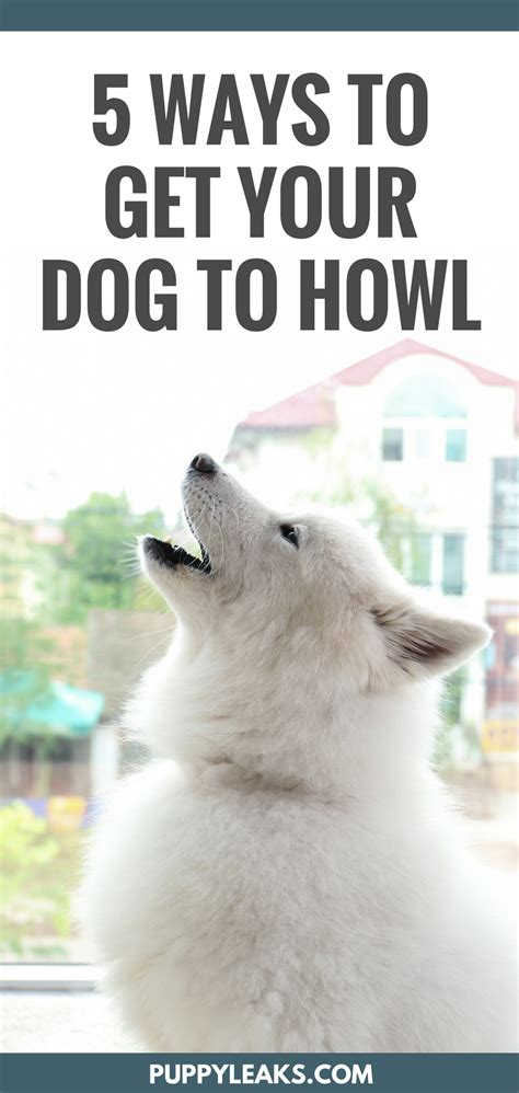 guaranteed to make your howl howling 5 easy ways to make your howl puppy leaks