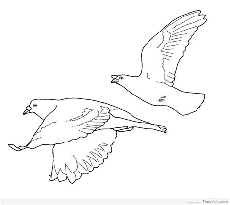 flying parrot coloring pages colouring pages of flying parrot www pixshark com
