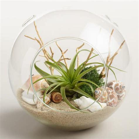 live plant office terrarium mini indoor desk garden beach garden live plant glass terrarium world market