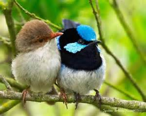 Two Birds two birds beautiful birds picture