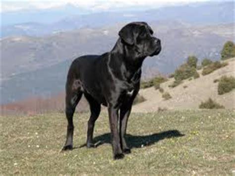 Topi Viii my sweet pet tobi razas de perros peligrosos vii quot el