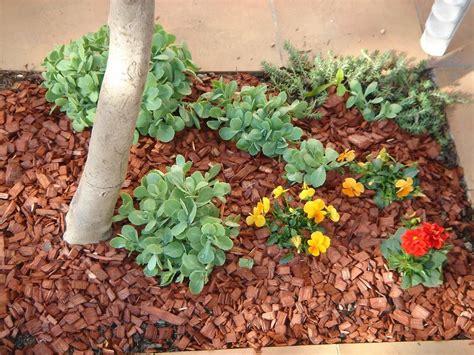 paillage jardin pas cher copeaux bois paillage pas cher