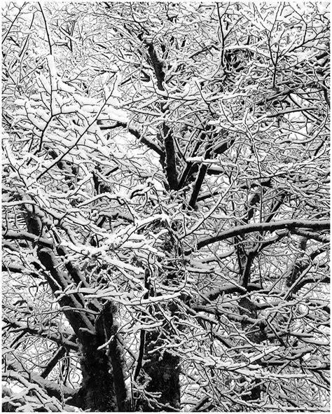 talvemustrid winter patterns plant nature photos vaido s photoblog