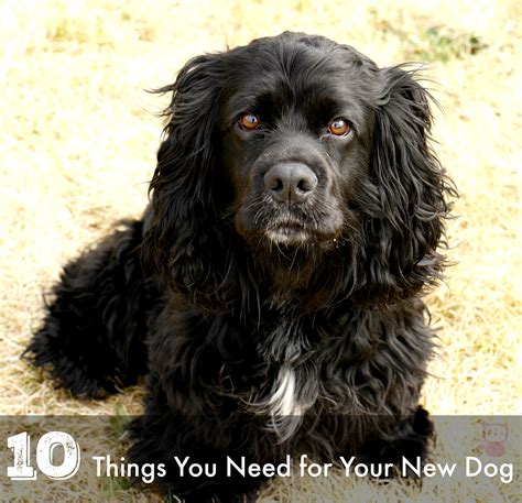 things to get for a new puppy 10 things you need for your new pridebites annmarie