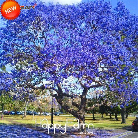Sale Trees Blue blue shrubs reviews shopping blue shrubs reviews