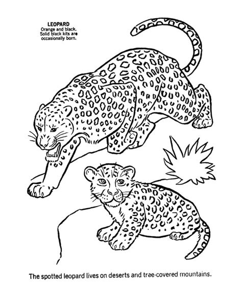 cute leopard coloring pages cute baby animal coloring pages wild animal coloring