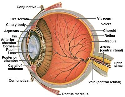 sectional anatomy of the eye vitreous floaters posterior vitreous detachment light