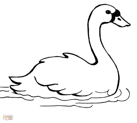 swans coloring pages swimming swan coloring page free