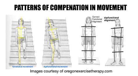 movement pattern analysis consultant certificate synergistic training improve mobility stability and