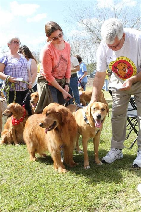 golden retriever rescue florida blessing of the goldens golden retriever rescue of mid florida