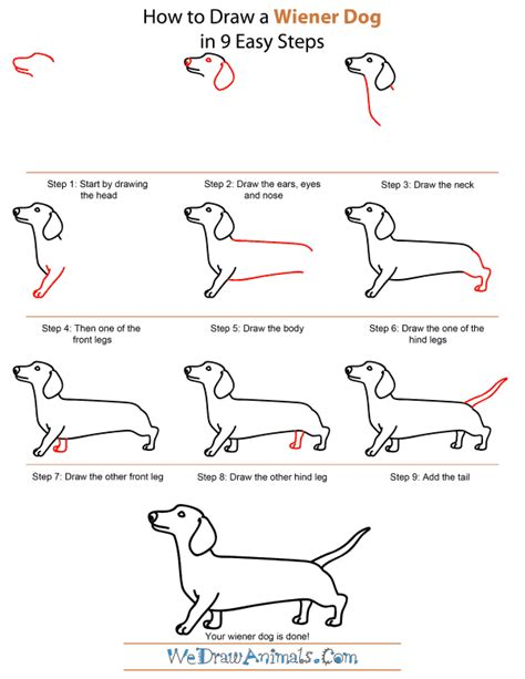 how to a wiener wiener dogs drawings images