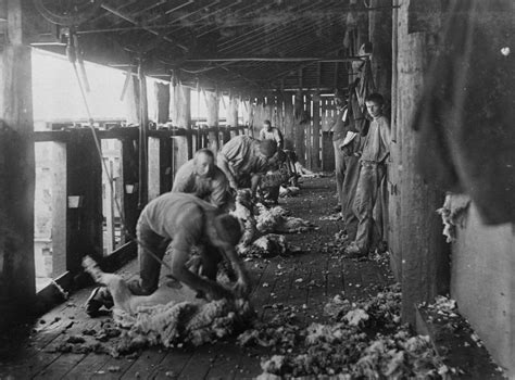 Shed Wordreference by Sheep Shearing Shed Mejorstyle