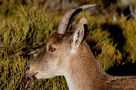 imagenes sensoriales y animicas imagenes de animales carnivoros y herbivoros