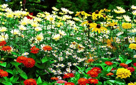 nice flower garden free flower garden hd nice wallpaper download background
