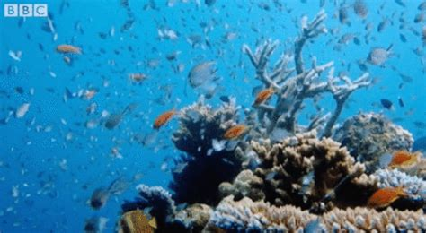 ocean life animated gif stargazing live sea gif by bbc find share on giphy