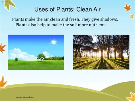 What Type Of Tree Is Used To Make Paper - environmental science evs plants class ii