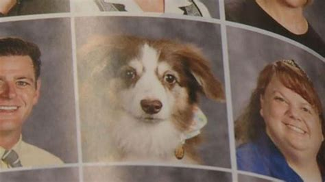 school for service dogs service dogs get their own pictures in high school yearbook
