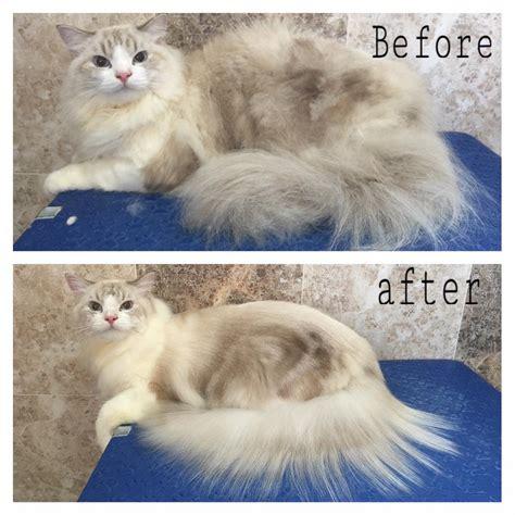 dog and cat house grooming and cat house grooming 28 images grooming cats pet store cat grooming boarding