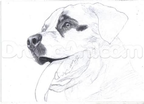 how to draw a rottweiler 1000 images about animals on chihuahuas coloring and rottweilers