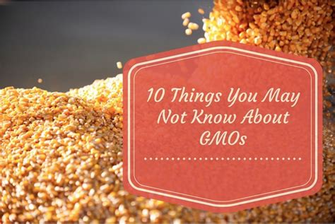 Tu14 10 Things You May Not Know About Minecraft Xbox 360 - 10 things you may not know about gmos
