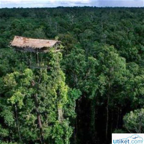 Tali Rami Jogja rumah pohon suku korowai utiket