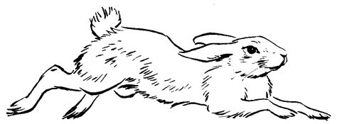 running rabbit coloring page bunny running drawing sketch coloring page