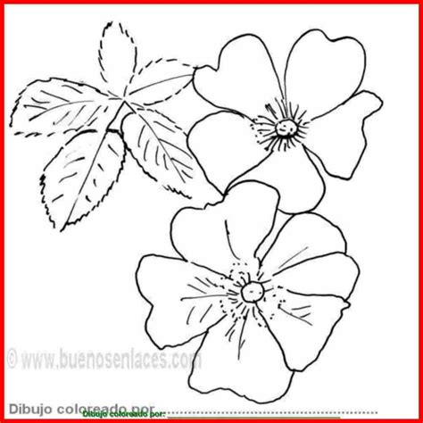 imagenes de rosas faciles para colorear dibujos de flores para colorear pintar e imprimir flores