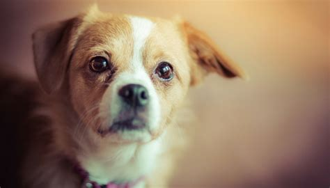 best dogs for time owners is there really a best breed for time owners puppy leaks