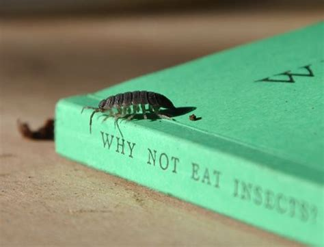 how to get rid of woodlice in my bathroom hunter gathering wild fresh food why not eat insects
