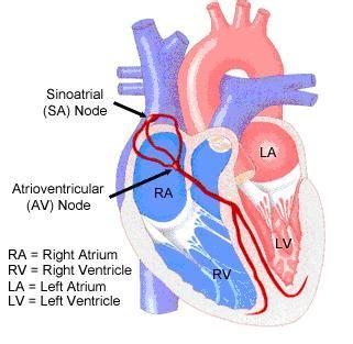 Files Fisiologi fisiologi jantung fisiologikedokteran s