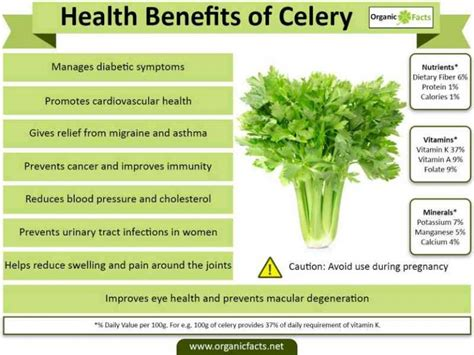 Aloe Vera Facts If You Eat Celery Every Day For A Week Here S What Happens
