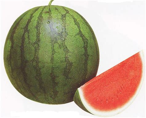 Buah Semangka Kuning Potong kandungan dan khasiat buah semangka meningkatkan