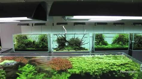 Aquascape Ada by Aquarium Aquascape Ada Nature Aquarium Live Planted
