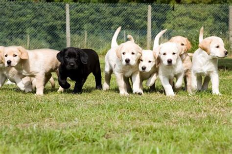 guide dogs fun day at thames valley business park get reading