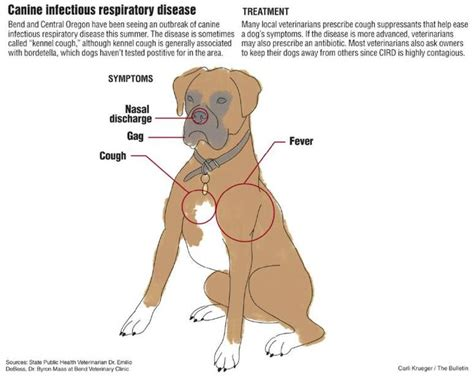respiratory infection in puppies 1000 images about features on