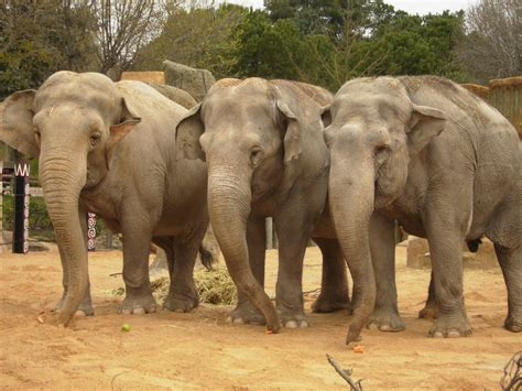 fotos animales zoo zoo de madrid apartamentos madrid por d 237 as g3 gale 243 n