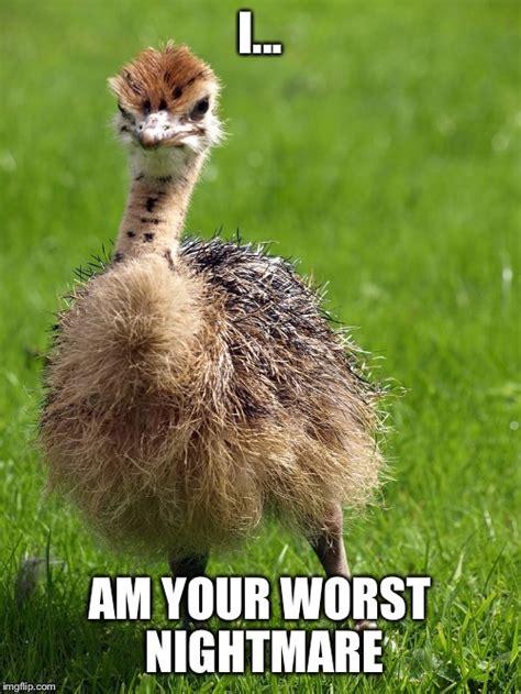 Ostrich Memes - worst nightmare ostrich baby imgflip