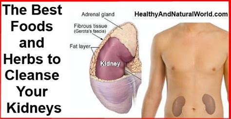 Home Remedy To Detox Kidney by Best Herbs And Remedies For Kidney Cleanse