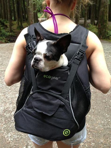 puppy backpack 17 best images about dogs on boston terrier boston terriers and