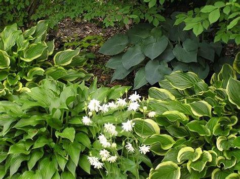 hosta flower beds hosta bed annual garden flowers pic jpg